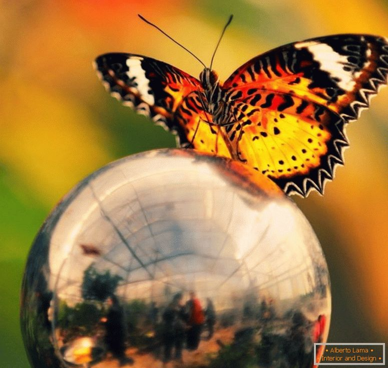 Butterfly-on-the-ball-9967