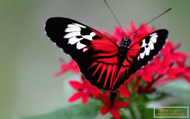 butterfly_dawnashley_nd